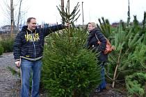 Manželé Peškovi z Jistebnice vybírají vánoční stromek.