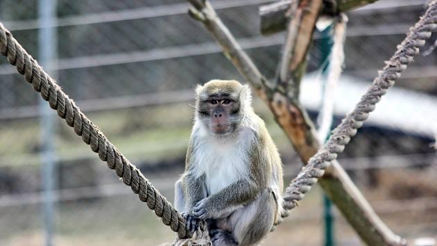 Zvířata z táborské zoo se na první návštěvníky těšila