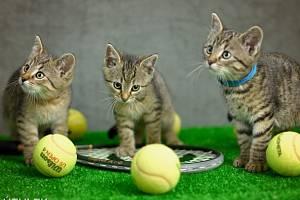 Rafael, Roger, Serena - tenisová špička.