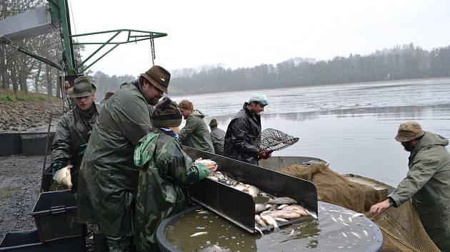 Výlov rybníka Velká Kaplice na Jistebnicku.