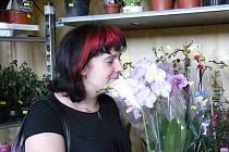 Víkendová prodejní výstava květin v Radimovicích u Želče.