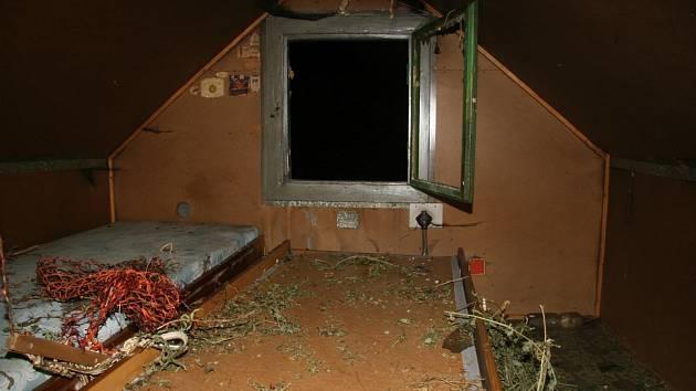 Muž v chatě sušil značné množství konopí.