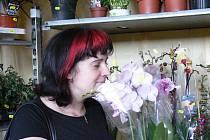 Prodejní výstava květin v Radimovicích u Želče.