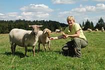 OVCE NA JEDLINĚ. Helena Žežulková se v sezoně stará na vrcholu kopce Jedlina u Staré Knížecí Huti o více než stovku ovcí.