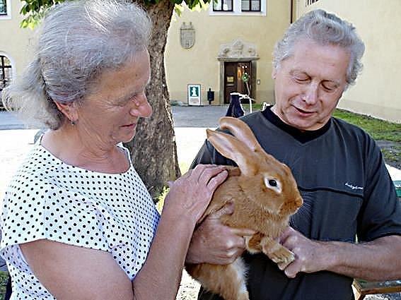 Samec králíka burgundského putoval do Svaté Kateřiny k manželům Havranovým (na snímku)