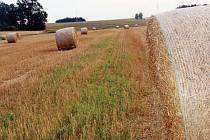 Na Tachovsku skončily žně, sklizené jsou obiloviny i olejniny. Letos bude většina zemědělců v mírném zisku, slušné byly výkupní ceny i výnosy.