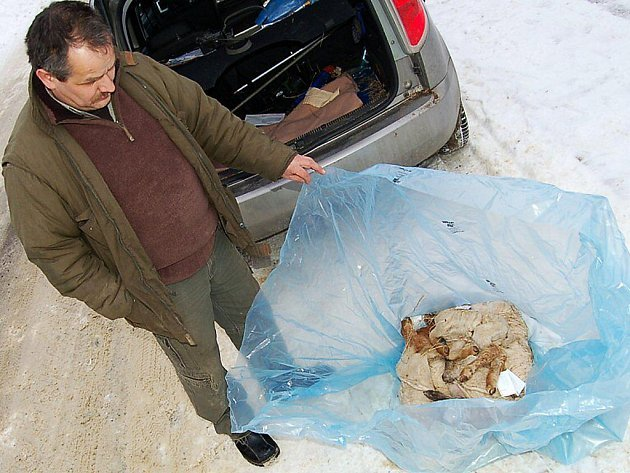 Pět mrtvých jehňat v igelitovém pytli putuje na pitvu. Karel Bobál ze Záchranné stanice živočichů ve Studánce (na snímku) je převezl v pondělí do Tachova, odkud budou převanena na Krajskou veterinární správu do Plzně.