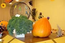 Z bohaté expozice letošní podzimní zahrádkářské výstavy v Tachově.