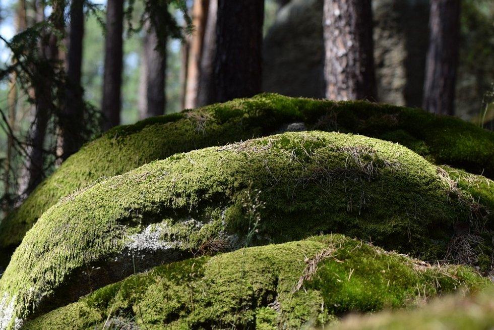 Na procházce po Sedmihoří narazíte i na Malý křakovský vrch