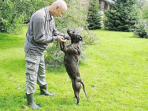 Majitel penzionu pro psy Sára v Novém Sedlišti Ivan Houf s fenkou teriéra při výcviku na zahradě.