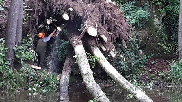 Vyvrácený strom ve Stříbře.