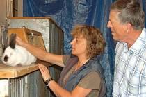 V sobotu se ve Stříbře konala pravidelná chovatelská prodejní výstava, Jednatelka Zdeňka Kantová a předseda chovatelů Antonín Stehlík ukázali kalifornského králíka