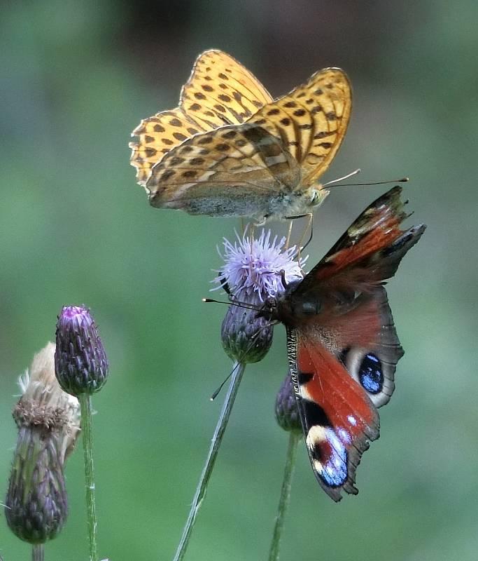 Vlasta Ratislavová: S lehkostí motýla