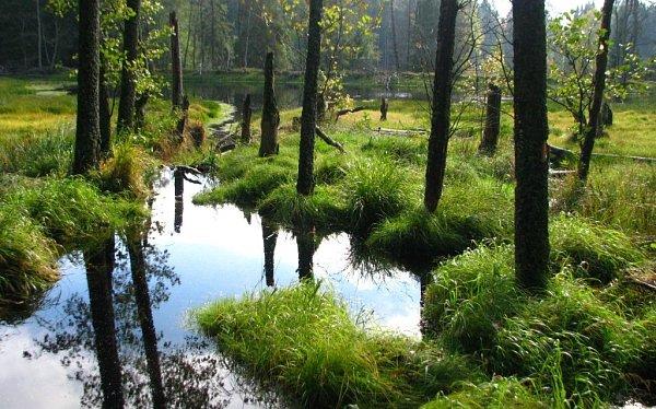 První hledačka vČeském lese je ve Vodním světě