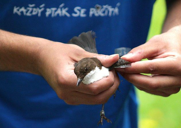 Vítání ptačího zpěvu v Tachově