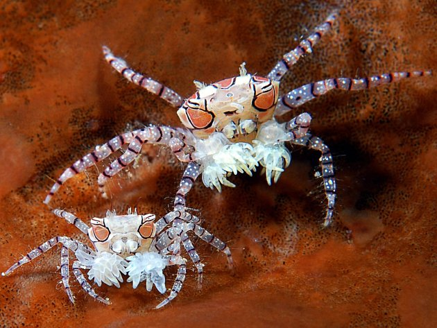 SEDM STOVEK fotografií posuzovala odborná porota. Ve Mži bude vystaveno 155 nejlepších z podmořského i sladkovodního světa.