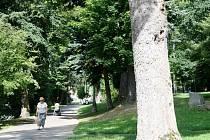 Úpravám městského parku v Tachově brání vysoká kyselost půdy a nedostatek finančních prostředků.