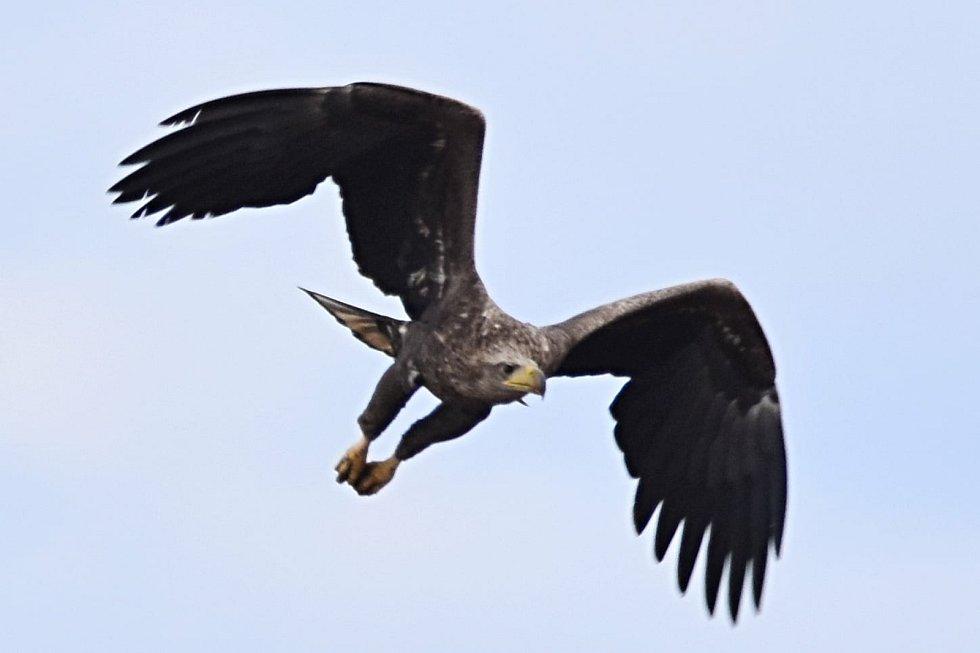 Snímky ornitologa Karla Machače. Foto: archiv Karla Machače