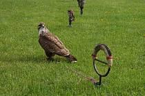 Na hřišti za ZŠ Hornická v Tachově se mohli žáci školy podívat na dravce