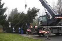 V Tachově káceli odborníci nynější pýchu tachovského náměstí – vánoční strom.