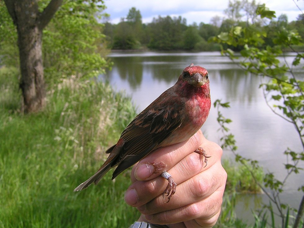 Snímky ornitologa Martina Lišky (foto archiv M. Lišky)