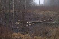 Vrásky na čele obyvatelům i energetikům přidělal bobr, který skácel stromy přímo na dráty elektrického vedení. Přerušil tak dodávku proudu přibližně pro tisíc lidí z několika obcí.