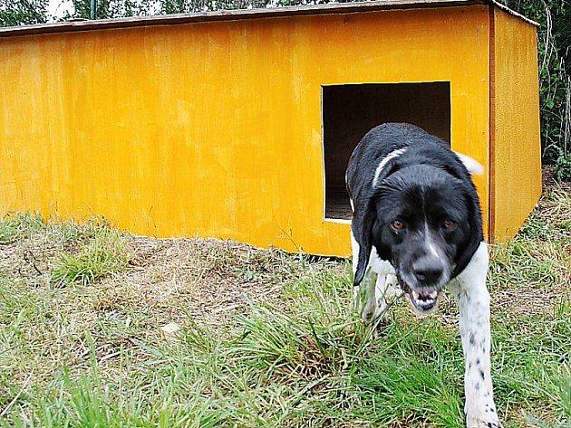 DALŠÍ OBYVATEL ÚTULKU. Od čtvrtka našel v útulku nový domov také tento vzrostlý pes a vyzkoušel i novou boudu.