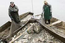 """SÍŤ SE ZATÁHLA, voda se """"vaří"""", rybáři přemisťují kapry a další plody Regentu z rybníku do nádrží na korbě nákladního automobilu, který veze ryby do sádek do Plané."""