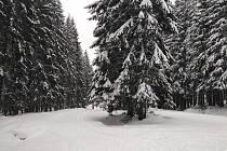 Obrázek letošní zimy.