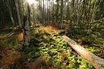 Z přírodní rezervace Pavlova Huť na Tachovsku.