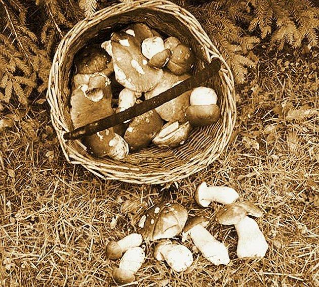 Červen, čas prvních houbařských vycházek. Na snímku hřibové nadělení ze 3. června 2007 z okolí Plané
