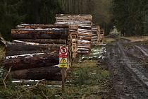 V lesích patřících městu Kladruby se kácely stromy napadené kůrovcem a také se devět hektarů plochy osázelo novými stromy.
