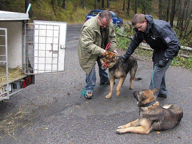Dva nalezené zdravé psy odvezl Karel Bobál do útulku.