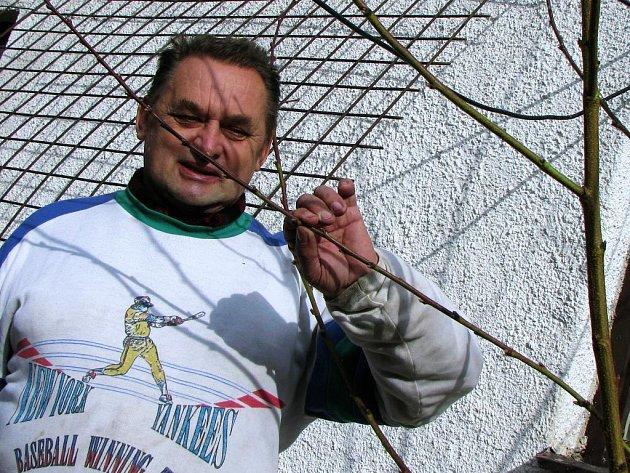 Meruňky vypučely o měsíc dříve, než loni. Na snímku Miloslav Netrh se svým výpěstkem.