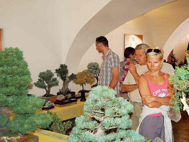 Sobotní výstava bonsají a suiseki se v Plané setkala s velikým zájmem veřejnosti.