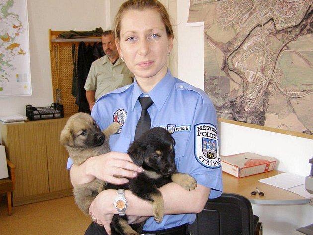 Dva z nalezených pejsků na poli mezi Víchovem a Otročínem. Na snímku je chová Miroslava Heřmanová z Městké policie Stříbro.