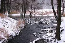 Na Tachovsku žije třicet bobřích rodin.