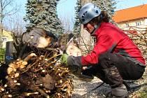 Zahrada tachovské mateřinky Pošumavská na nějakou dobu zpustne, přijde téměř o všechny stromy.