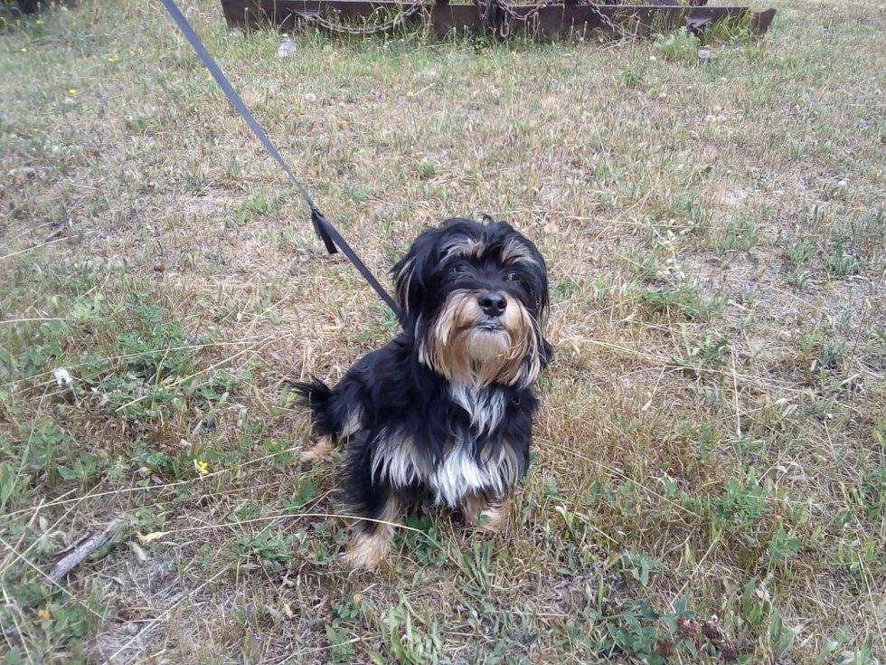 Tento pes byl uvázaný ke smrku u Václavského rybníku.