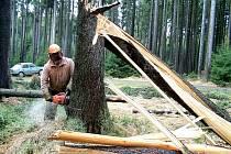 Lesní správci mají stále plné ruce práce s odstraňováním lednové kalamity. Zpracováno je zhruba devadesát procent polomů, do konce měsíce se musí odklidit zbytek. Snímek je z okolí Broumova.