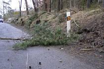 Polámané větve a stromy na silnicích na Tachovsku