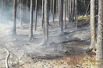 Požár lesní hrabanky.