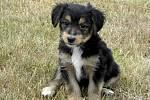 Jedním z letních přírůstků psího útulku v Tachově je Alešek.