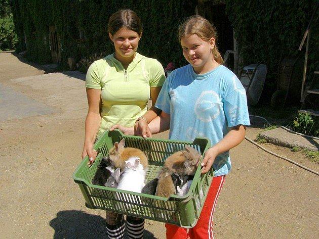Hana Koníčková a Nikola Kvasničková (zleva) ukazují mláďata králíků.