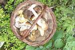 U Brtného potoka se houbař nenudí.