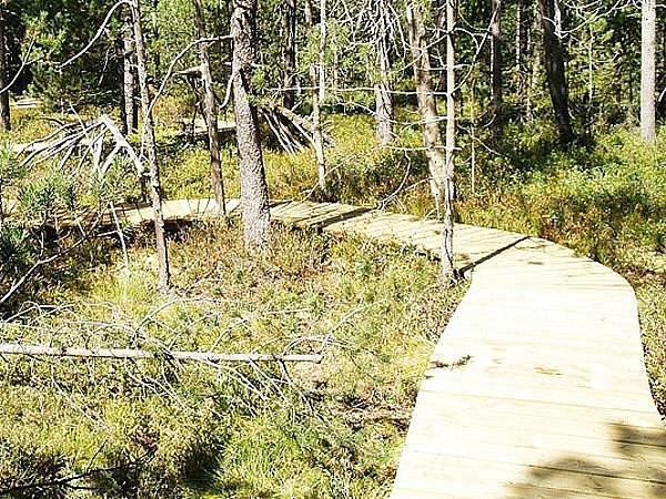 K rašeliništi dovede turisty nový povalový chodník.