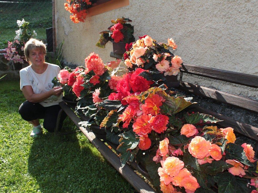 Květy begónií prozařují zákoutí zahrady i parapety oken rodinného domku v Trnové.