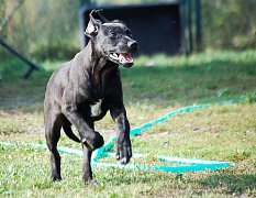 Nalezené a zatoulané psy má U Šmudliny  nyní na starosti Gabriela Jägerová