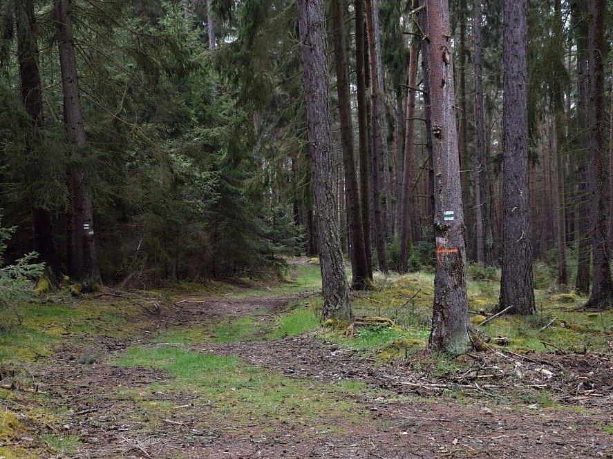 Cesta z Mileva do Prostiboře.