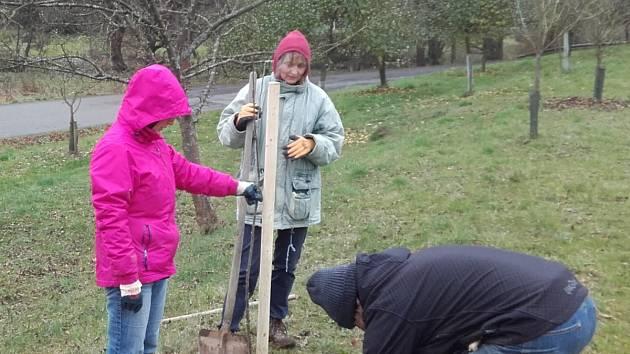 Ovocné stromky zasázeli Svojšínští v sadu i aleji